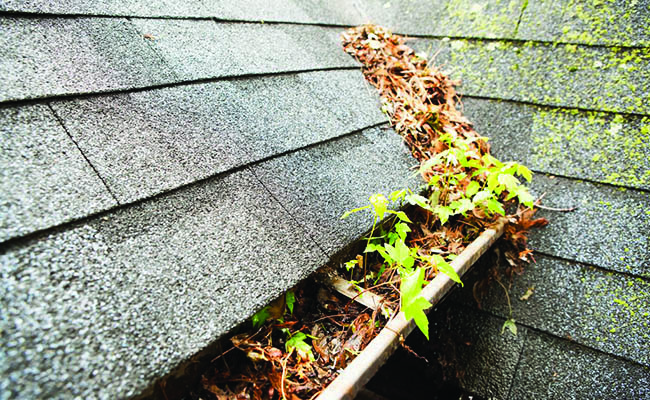 Proper Drainage & Gutter Issues